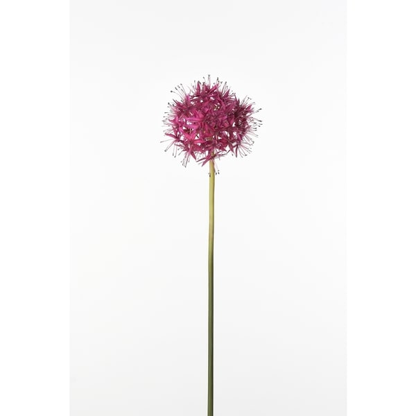 Allium 30-inch Stem (Pack of 12)