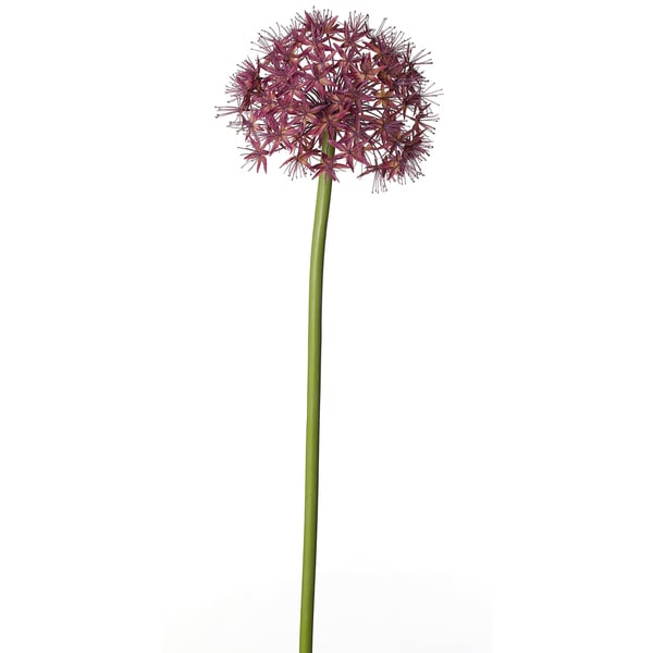 38-inch Giant Allium Stem (Pack of 6)