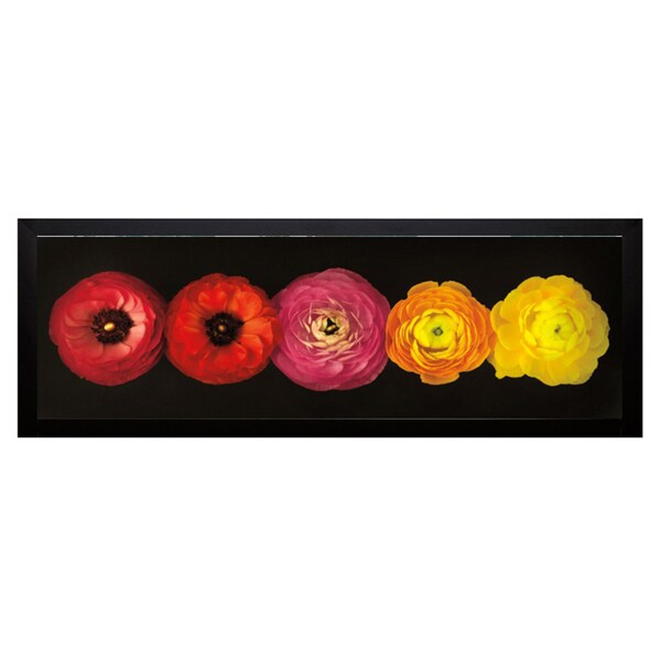 Assaf Frank 'Ranunculus' Framed Artwork