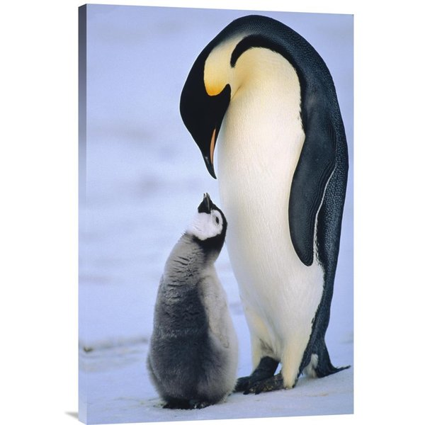 Konrad Wothe 'Emperor Penguin adult with chick, Antarctica' Stretched Canvas