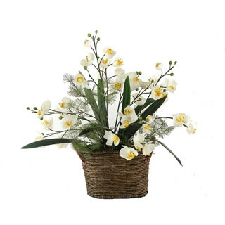 Cream Phael Orchids/ Foliage in Handled Basket