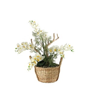 Cream Phael Orchids/ Foliage/ Mimosa Spray in Handled Basket