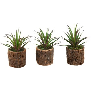 D&W Silks Succulents in Cork Covered Glass - Set Of 3
