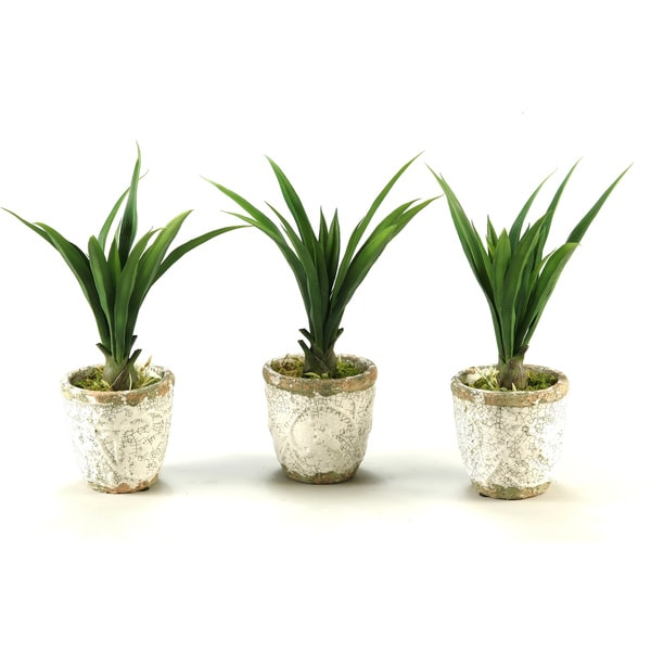 Lily Grass in Crackled Stoneware Pot (Set of 3)