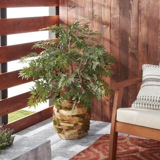 D&W Silks Ming Aralia Bonsai Tree in Wooden Root Ball Planter