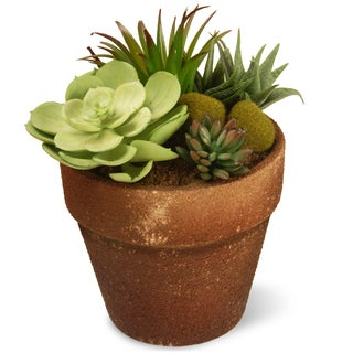 10-inch Green Potted Succulent