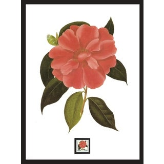 Camellia Framed Wall Art with Postage Stamp