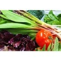 Rustic Roots Delivery Organic Mixed Produce and Fresh Eggs Bundle