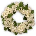 White Hydrangea 24-inch Wreath