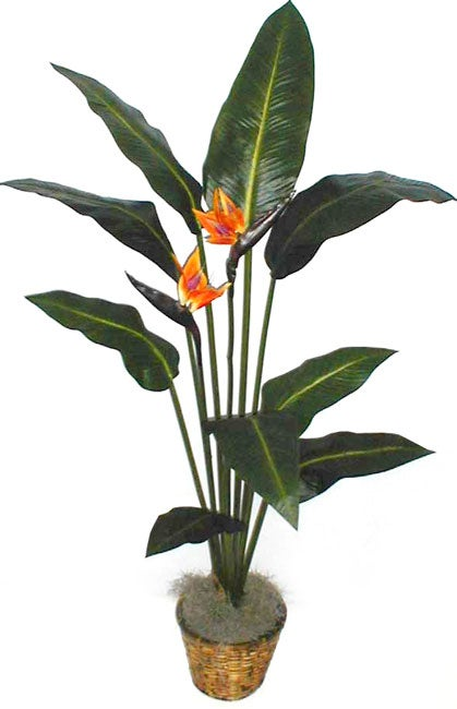 silk bird of paradise tree 1014474 shopping great deals on silk plants. Black Bedroom Furniture Sets. Home Design Ideas