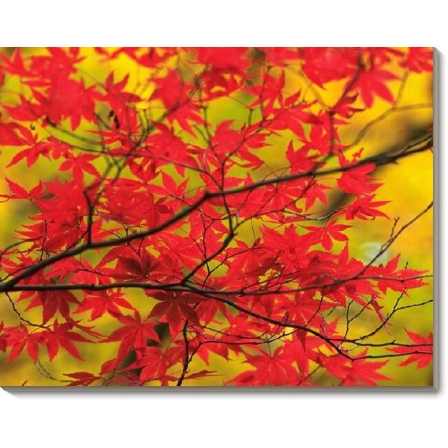 'Japanese Maple in Autumn' Canvas Art