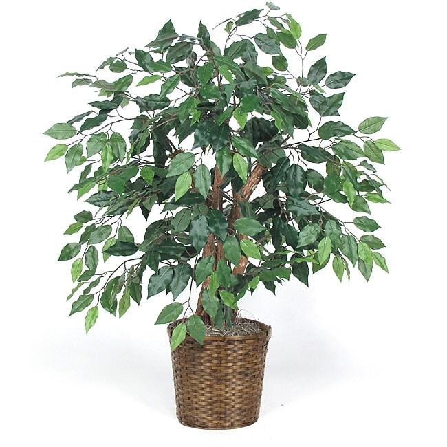 3-foot Green Ficus Bush