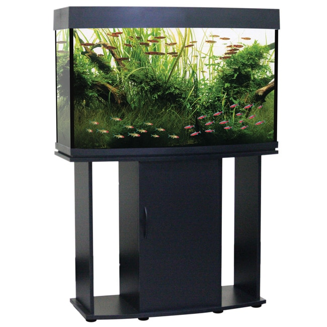 North Star Collection Bow Front 58 Gallon Aquarium and Stand