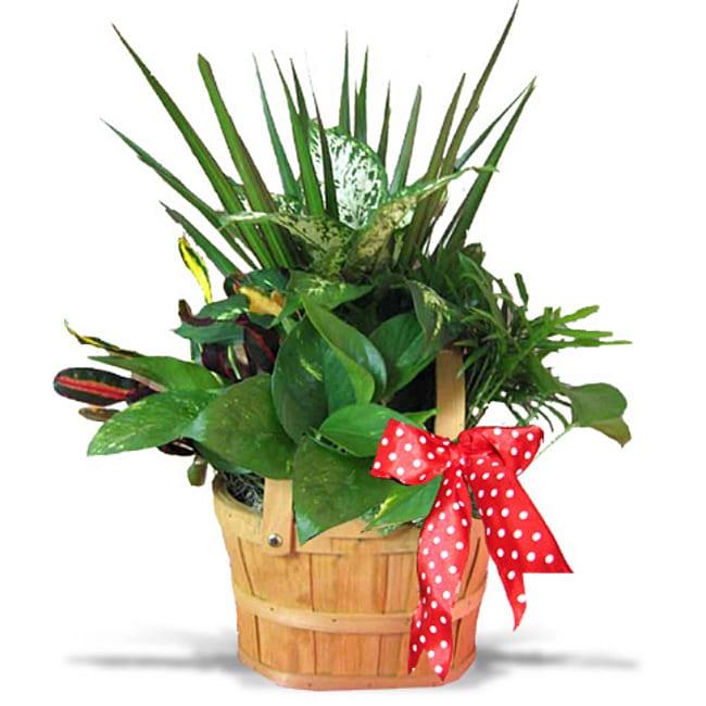 Picnic Basket Tropical Planter