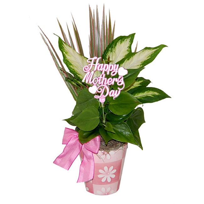 Mother's Day Daisy Tropical Planter