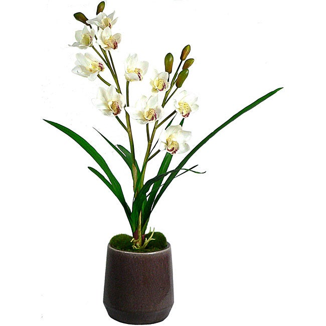 Laura Ashley White Orchid in Ceramic Container