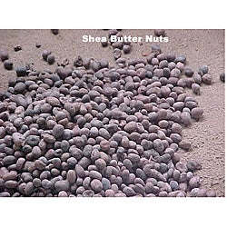 Handmade 3-pound Unrefined Natural Shea Butter (Ghana)