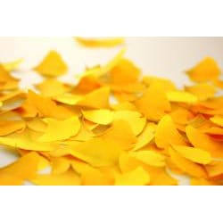 Leaf-it _GINGKO- Yellow (Large) Sticky Notes (Pack of 20)