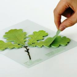 Leaf-it Oak Green Medium Sticky Notes (Pack of 20)