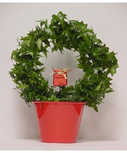 English Ivy Topiary Wreath