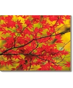 'Japanese Maple in Autumn' Canvas Art