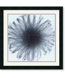 Steven N. Meyers 'Dahlia' Framed Art Print