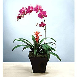 Potted Exotic Orchid Garden