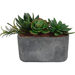 Laura Ashley Clay Container Succulents Silk Plants