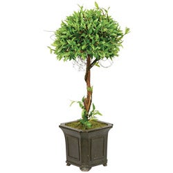 Pointed 24-inch Boxwood Topiary