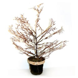 Good Tidings Potted Twig Wire Tree with Snow Brown Pot
