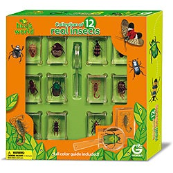 Bug's World Collection of 12 Real Insects