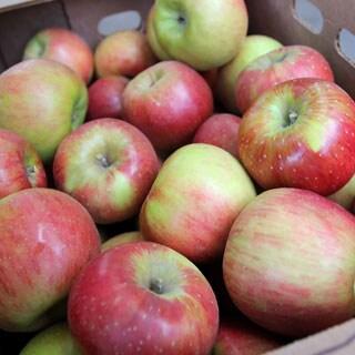 Washington Sweet Tango Apple Mix and Match Assortment (7.5 or 15 Pounds)
