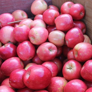 Fresh Washington Pinata Mix and Match Apple Assortment (7.5 or 15 Pounds)