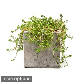 Repose Eco-concrete Charcoal Grey Cube Planters