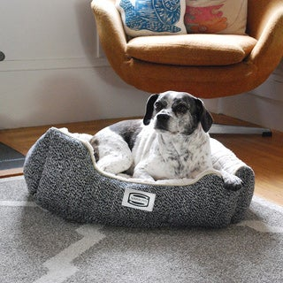 Simmons Blissful Cup Orthopedic Memory Foam Dog Bed
