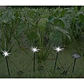 Dragonfly Solar Outdoor Solar Lights