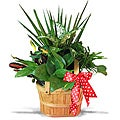 Picnic Basket Tropical Planter
