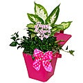 Mother's Day Pretty And Pink Tropical Planter