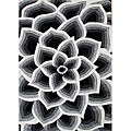 Metro Black/Off-white Floral Hand-tufted Wool Rug (5' x 8')