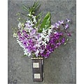 Dendrobium Orchids (12 Stems)