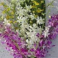 Dendrobium/ Oncidium Orchid Assortment (12 Stems)