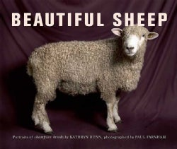 Beautiful Sheep: Portraits of Champion Breeds (Paperback)