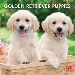 Golden Retriever Puppies 2013 Calendar (Calendar)