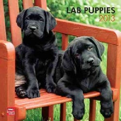 Lab Puppies Calendar 2013