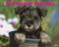 Just Schnauzer Puppies 2013 Calendar