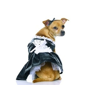 Secret Wishes French Maid Pet Costume, Small