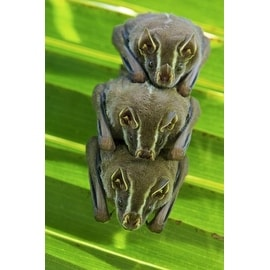 Striped Yellow-Eared Bat Trio Roosting In Palm Tree, Panama by James Christensen Animals Art Print