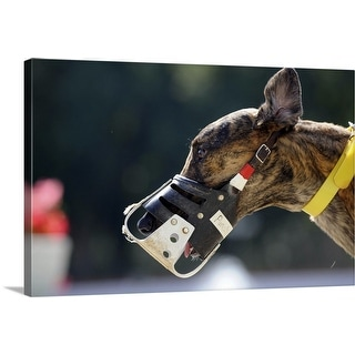 """""""A muzzle on a Greyhound at Fort Myers, Florida"""" Canvas Wall Art"""