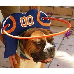 Muffin's Halo for Blind Dogs Quarterback Style