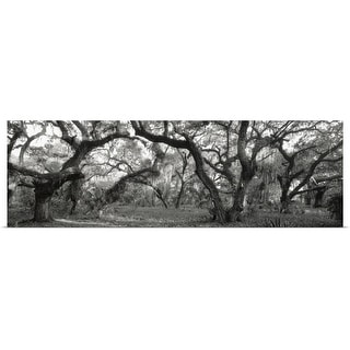 """Oak Trees in a forest, Lake Kissimmee State Park, Florida"" Poster Print"